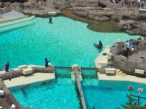 Anaheim Round-Trip Theme Park Transfer: SeaWorld San Diego Photos