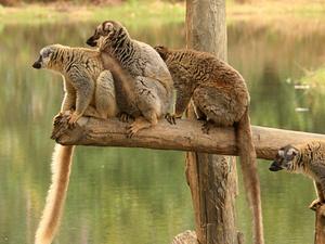 East: Lemurs - Culture and Pangalanes Channel Photos