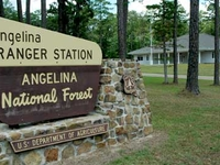 Angelina National Forest