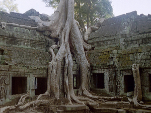 Capital & Angkor Tour 5 Days/ 4 Nights Photos