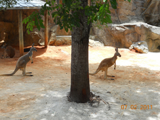 Animals In Zoo