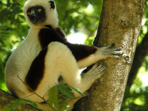 Sifakas Tour Photos
