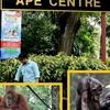 Ape Centre, Home To Humans Closest Species