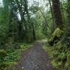 Apiti Hut To Twain-Waipotiki Hut Trail - Te Urewera National Park - New Zealand