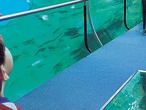 Aquarium - Palacio del Mar