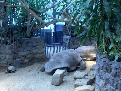 Aldabra Tortoises At Artis