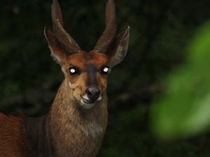 1 Day Arusha National Park Photos