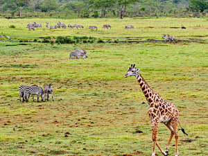 Student Special Package-Wildlife And Cultural Tours Photos