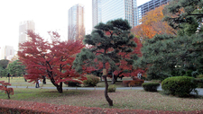 Autumn Leaves In Hama Rikyu