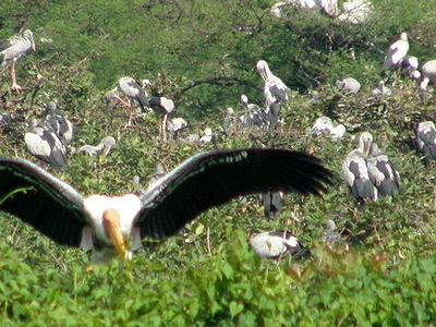 A View Of Vedanthangal Bird Sanctuary