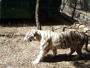 Bannerghatta Zoo