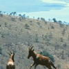 Topis Above Akagera Valley