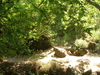 Amud Stream San Jose