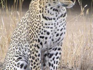 Badrama - Usakothi Wildlife Sanctuary