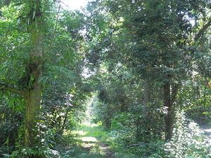 Balas - Sawai Mansingh Sanctuary Campsite