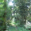 Balas - Sawai Mansingh Sanctuary