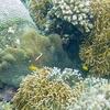 Balicasag Island Marine Sanctuary
