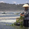 Balinese Traditional Farming