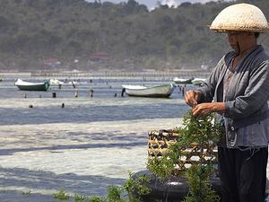 Balinese Traditional Farming Photos
