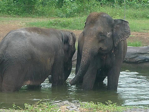 Bali Zoo Photos