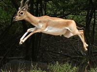 Balukhand - Konark Reserve Forest