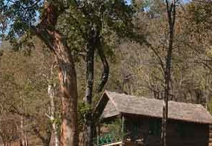 Bannerghatta Jungle Lodges And Nature Camp