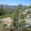 Bear Creek California