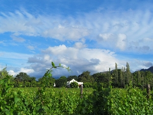 Stellenbosch, Franschhoek & Paarl Valley Wine Day Trip Photos