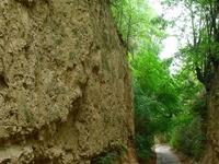 Benedek Canon study trail