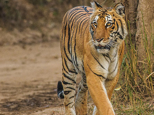 Jim Corbett National Park Adventure Tour Package Photos