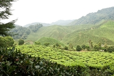 Bharat Plantations Cameron Highlands
