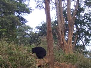 Bherjan-Borajan-Padumoni Wildlife Sanctuary