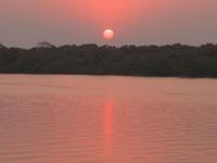 Bhitarkanika Mangroves