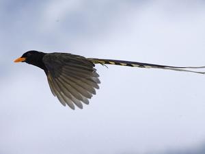 16 Days Bhutan Bird Watching Package Photos