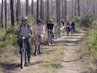 Long Trail Pine Key