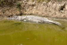 Big Croc