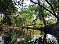 Billy Creek