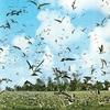 Bird Flocks Bird Island Seychelles
