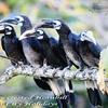 Birding In Lambir Hills National Park