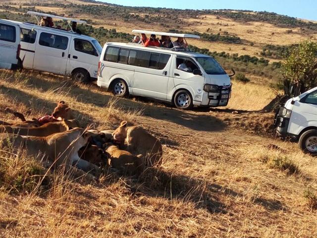 Wildebeest Migration Offers Photos