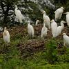 Bor Wildlife Sanctuary