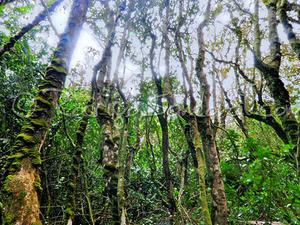 Bosque De Fray Jorge National Park