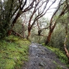 Bosque De Queñuales - Ancash Perú