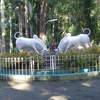 Botanical Garden-Puducherry
