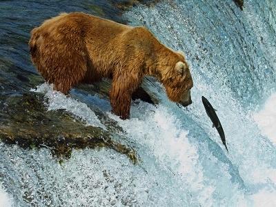 Brooks Falls - Katmai NP Alaska