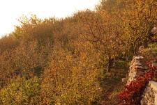 Bsharri Apple Trees