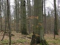Bukowy Las Nature Reserve