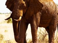 Tsavo East National Park 2 Days Safari
