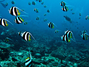 Bunaken and Kuliner Manado - 3 Days Package Photos