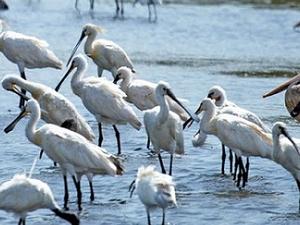 Bird Watching in Srilanka